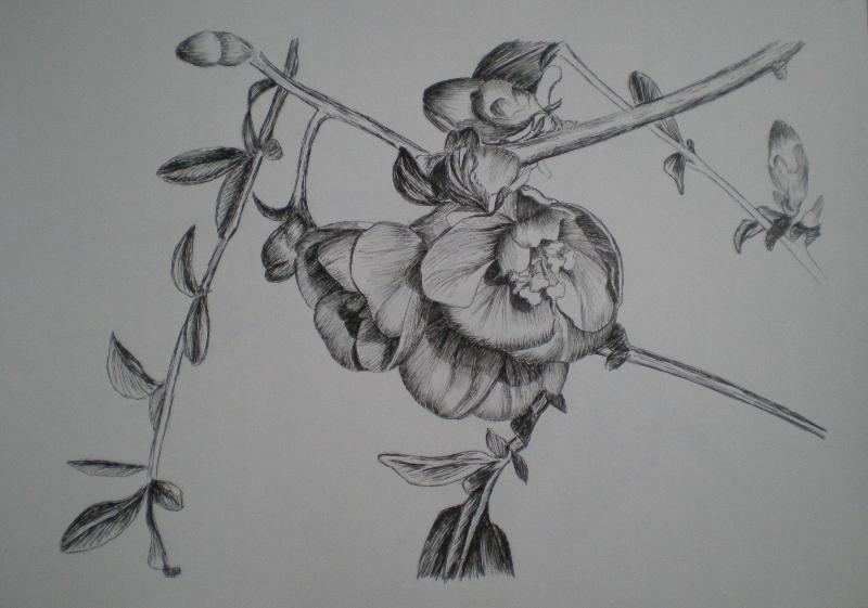 Disegni a inchiostro for Disegni di fiori a matita